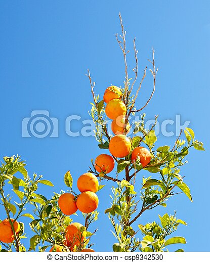 Branches of orange - csp9342530