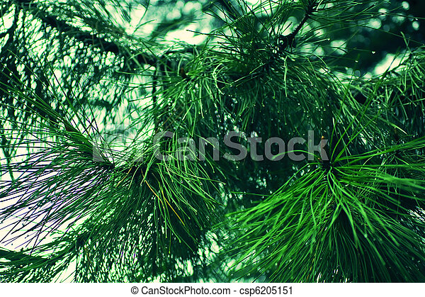 branches of the larch - csp6205151