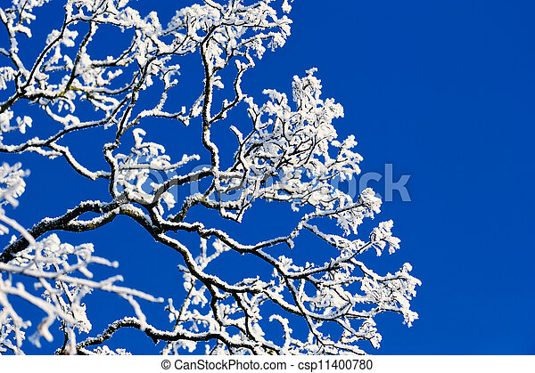 Branches of the tree - csp11400780