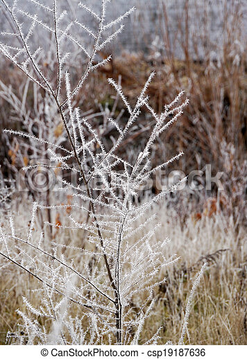 Branches of the trees in hoarfrost close up. - csp19187636