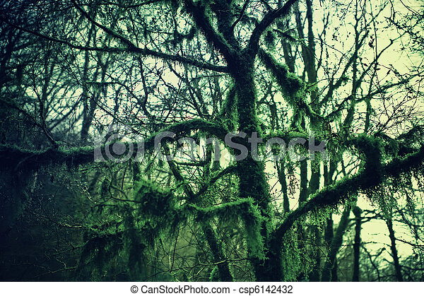 Branches of the trees in the forest covered with moss - csp6142432