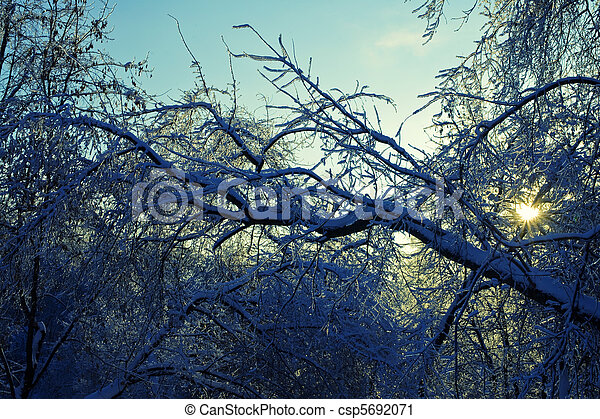Branches of the trees in the ice against the evening sky - csp5692071