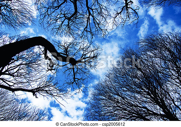 Branches of trees against the blue sky - csp2005612