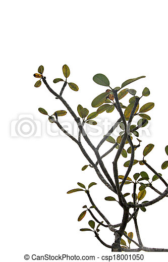 Branches of trees and leaves. - csp18001050