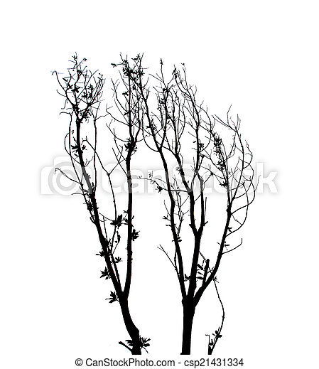 Branches of trees and leaves. - csp21431334