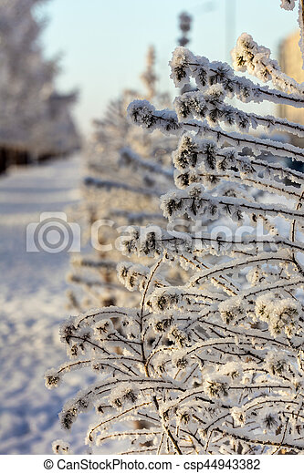 branches of trees in hoarfrost - csp44943382