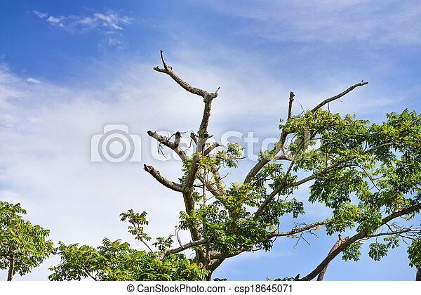 Branches of trees - csp18645071