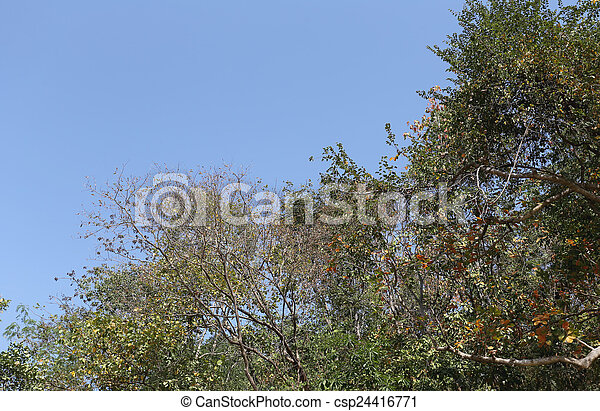 Branches of trees. - csp24416771