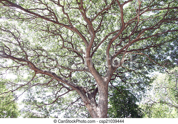 Branches of trees. - csp21039444