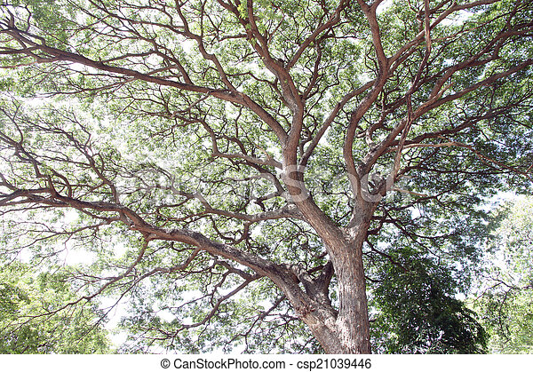 Branches of trees. - csp21039446