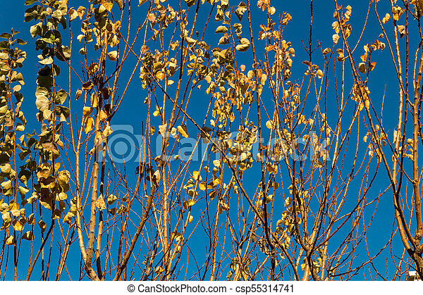 branches of trees - csp55314741