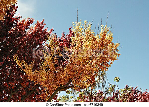 Branches of trees - csp6719349