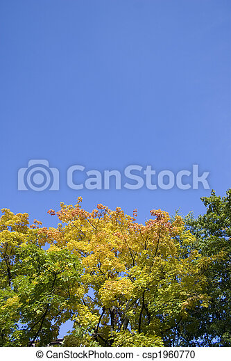 Branches of trees - csp1960770