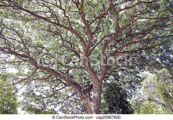 Branches of trees. - csp20967600