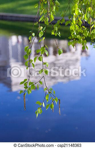 branches, printemps, bouleau - csp21148363