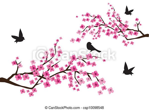 branches, sacura - csp10098548
