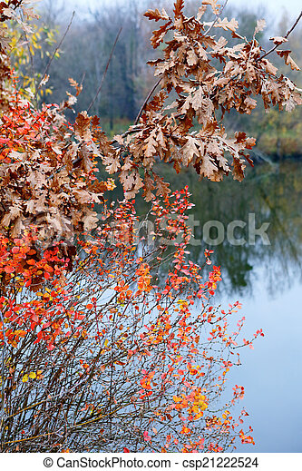 Branches with autumn leaves on the background of river - csp21222524