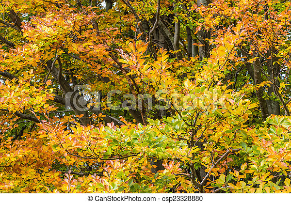 Branches with autumn leaves - csp23328880