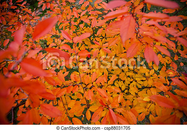 branches with autumn leaves - csp88031705