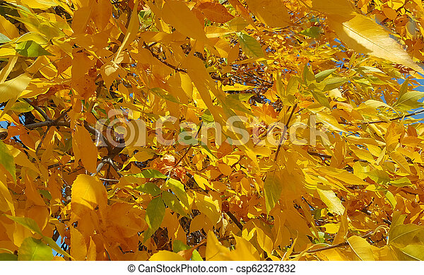 Branches with autumn leaves - csp62327832
