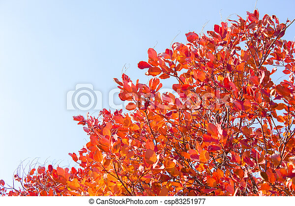 Branches with leaves on a background of blue sky, minimalism - csp83251977