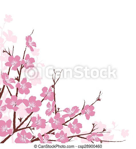 Branches with Pink Flowers Isolated on White - csp28900460