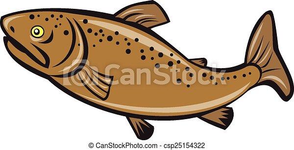 Brauner Forellenfisch seitlich - csp25154322