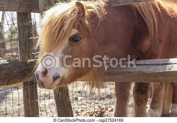 braunes pony - csp27524169
