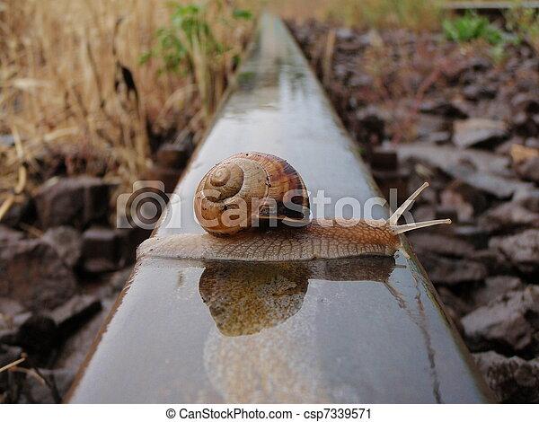 Brave snail - csp7339571