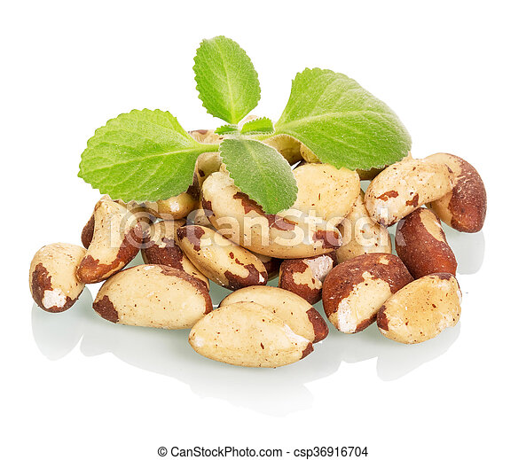 Brazil nuts and leaves isolated on white - csp36916704