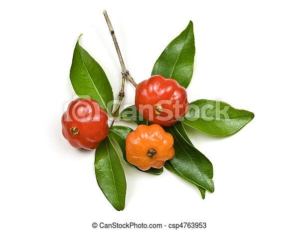 Brazilian Cherry - Pitanga - csp4763953