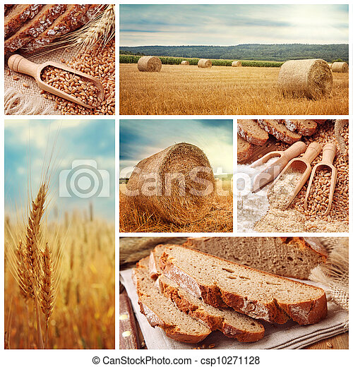 Bread and harvesting wheat - csp10271128
