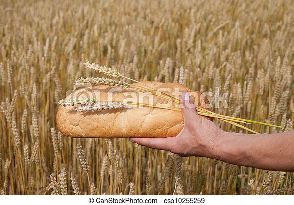 Bread and wheat. - csp10255259