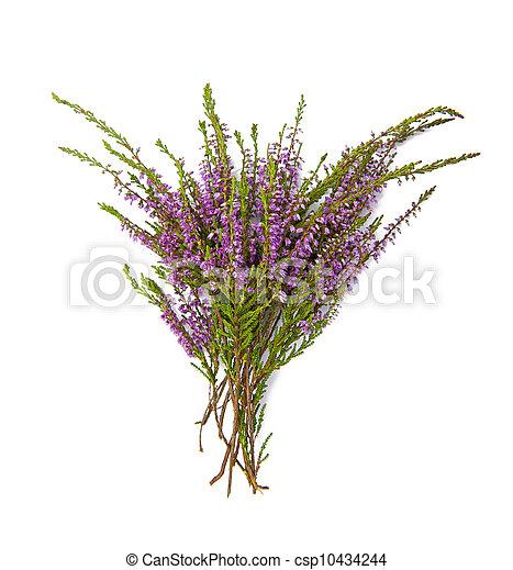 Bouquet de brezo - csp10434244