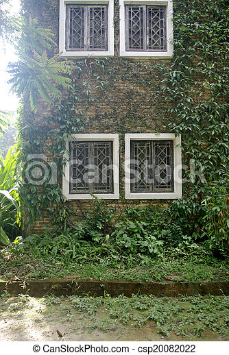 brick wall with climbing tree, plant wall with white window - csp20082022