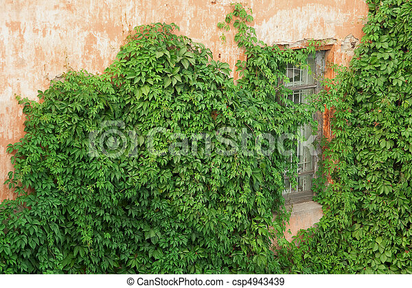 Brick wall with ivy - csp4943439