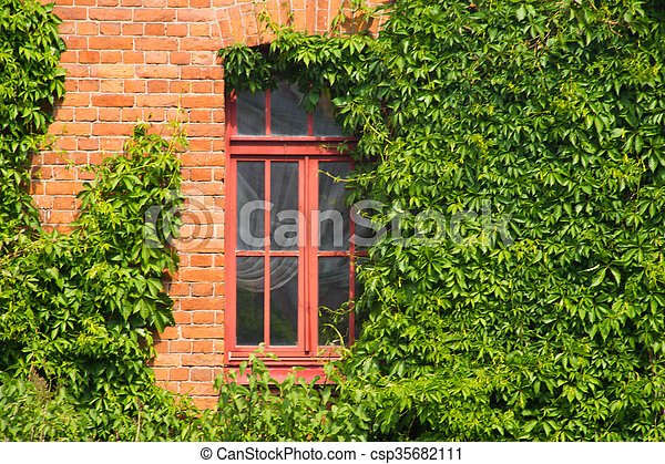 brick wall with window ivy covered - csp35682111