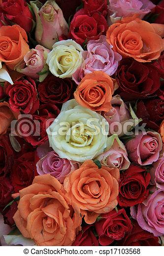 Bridal roses in various colors - csp17103568