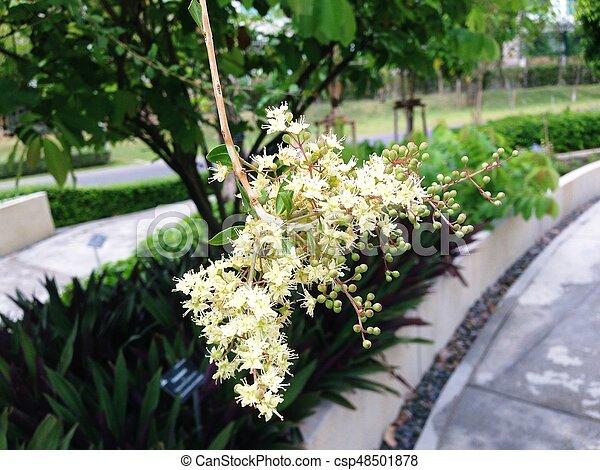 Bridelia ovata decne tree small white flowers mightylinksfo