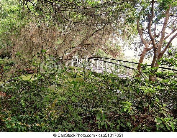 Bridge at Magnolia Plantation in Charleston, SC - csp51817851