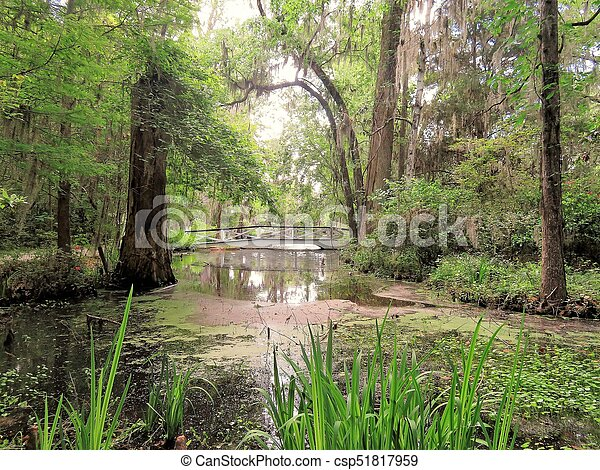 Bridge at Magnolia Plantation in Charleston, SC - csp51817959