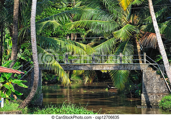 Bridge in Jungle - csp12706635