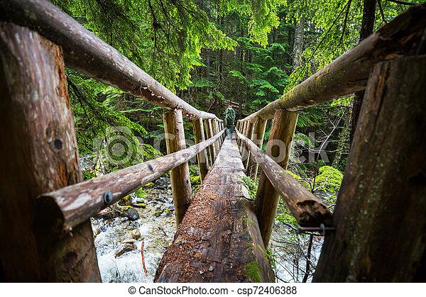 Bridge in the forest - csp72406388