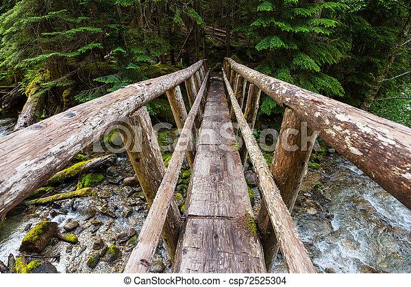 Bridge in the forest - csp72525304