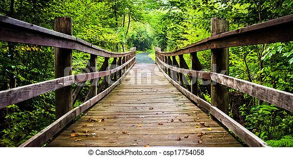 bridzs, gyalogló, limberlost, virginia., nemzeti nyom, shenandoah, liget - csp17754058