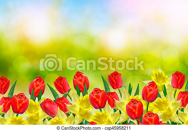 Bright and colorful spring flowers daffodils and tulips stock bright and colorful spring flowers daffodils and tulips csp45958211 mightylinksfo