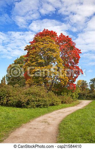 bright autumn tree in park  - csp21584410