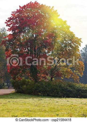 bright autumn tree in park  - csp21584418