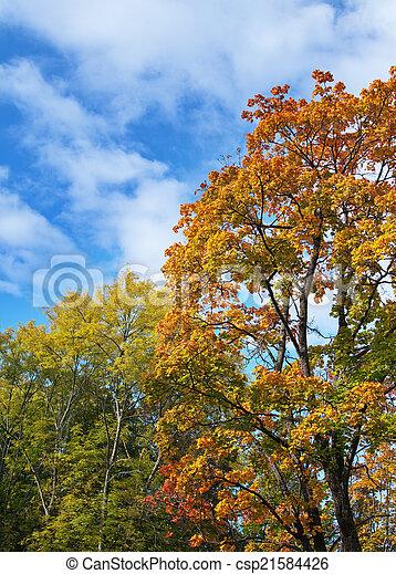 bright autumn tree in park  - csp21584426