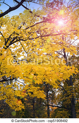 bright autumn tree in park - csp51908492